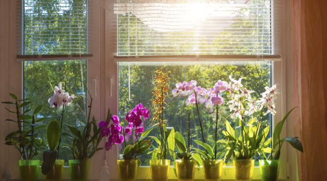 C'est l'été : fleurissez votre intérieur pour ravivez vos menuiseries