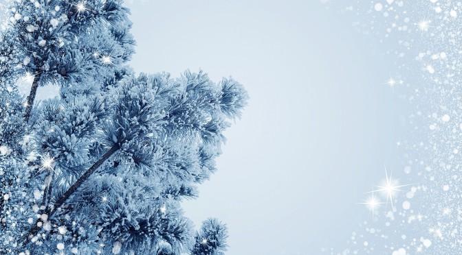 Quel sapin de Noël choisir : sapin artificiel vs sapin naturel ?
