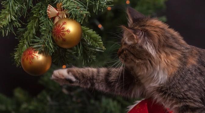 La décoration de sapin : la pièce unique d'un Noël réussi ?