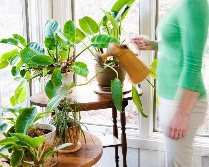 comment prendre soin de ses-plantes Oknoplast