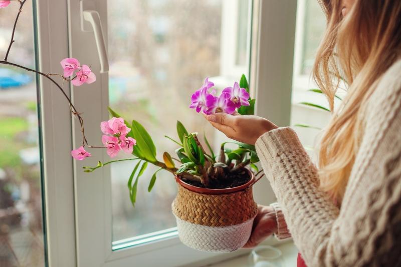 Fleurs, quelles espèces pour vos rebords de fenêtre