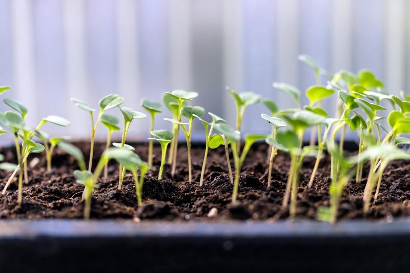 Faire pousser des salades sur un balcon